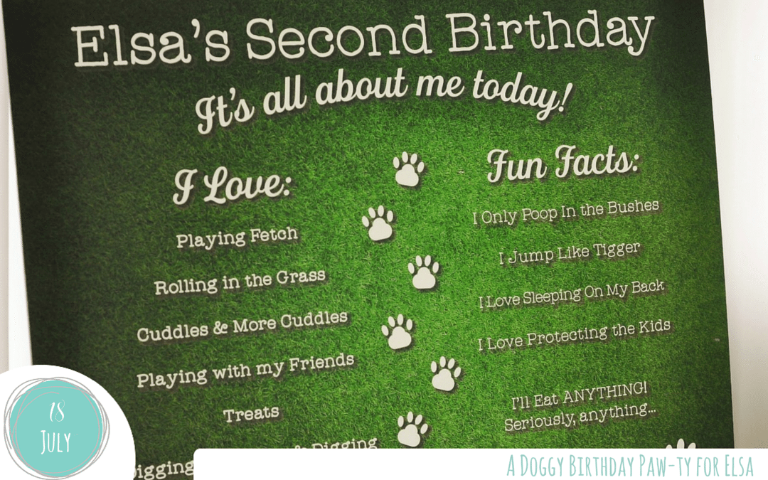 It's a Doggy Party! – Hosting the Perfect Pet Party